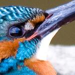 kenybird
