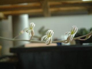十二の巻の花