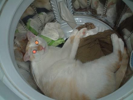 ダッシュ 洗濯機で寝る