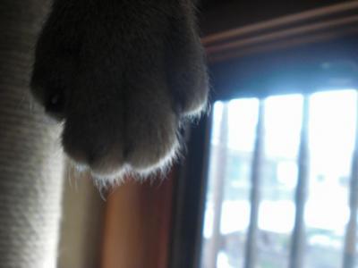 きなこの手