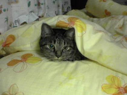 猫は布団で丸くなる~♪
