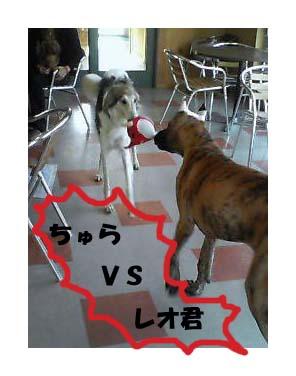 これは、戦いです!!