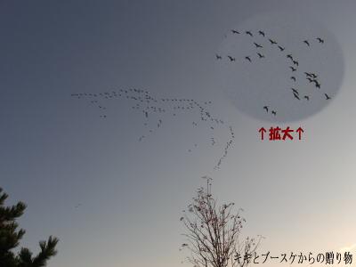 k-2008-10-13-1.jpg