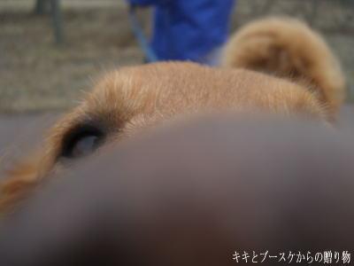 k-2009-3-30-1.jpg