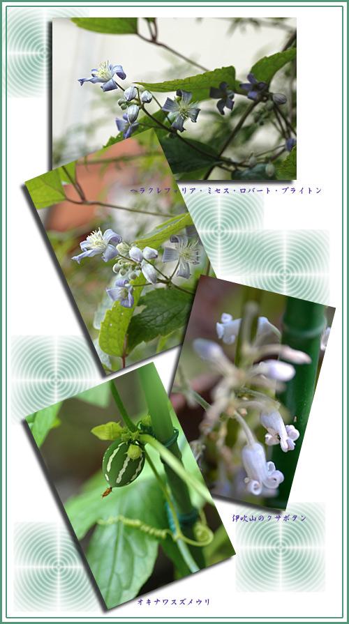 10月10日庭の花