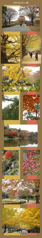 11月24日昭和記念公園1