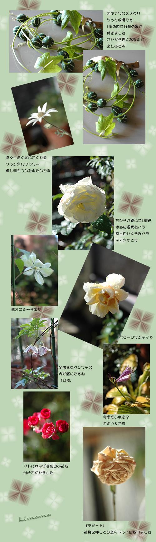 12月3日庭の花