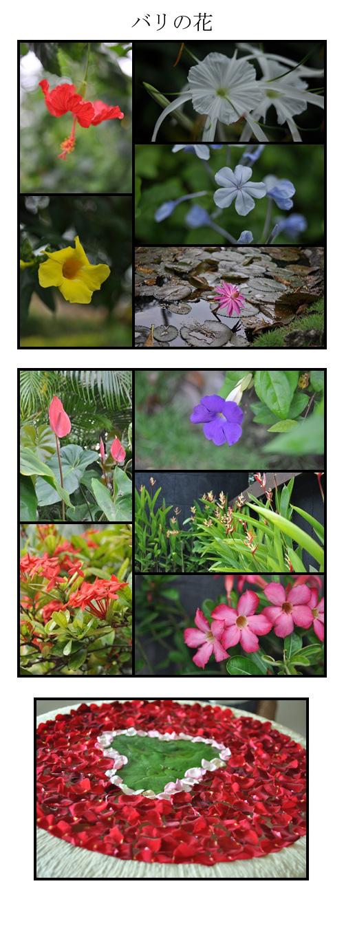 1月29日バリの花
