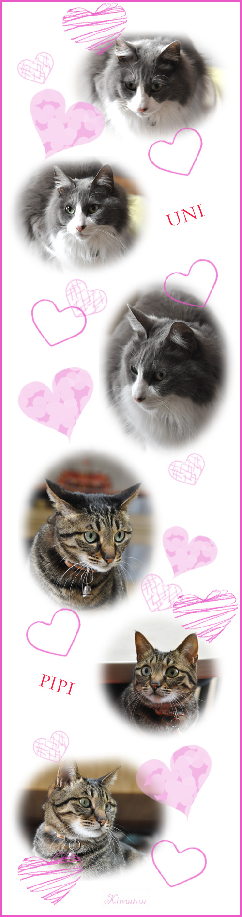 2月22日猫の日1