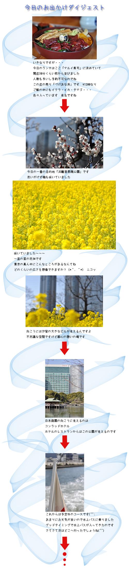 3月12日菜の花1
