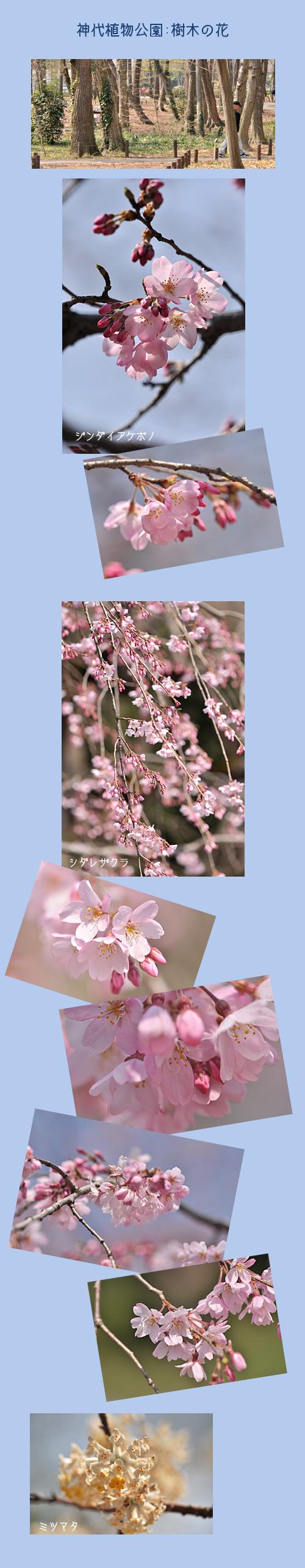 3月22日神代植物園1