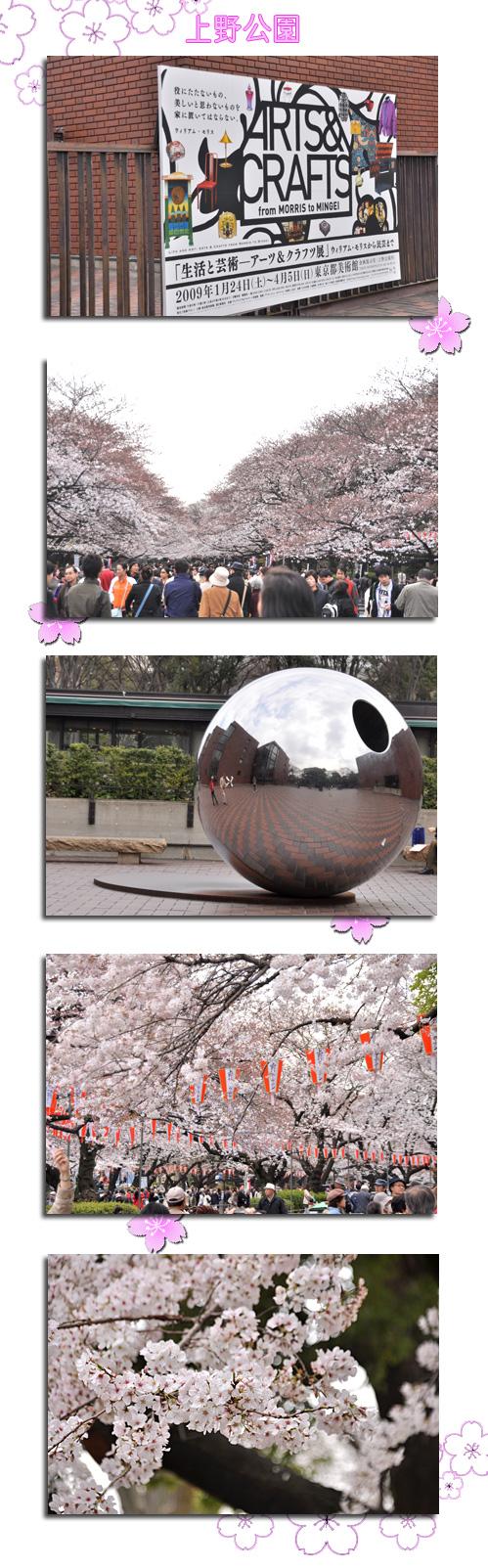 3月31日上野公園のさくら1