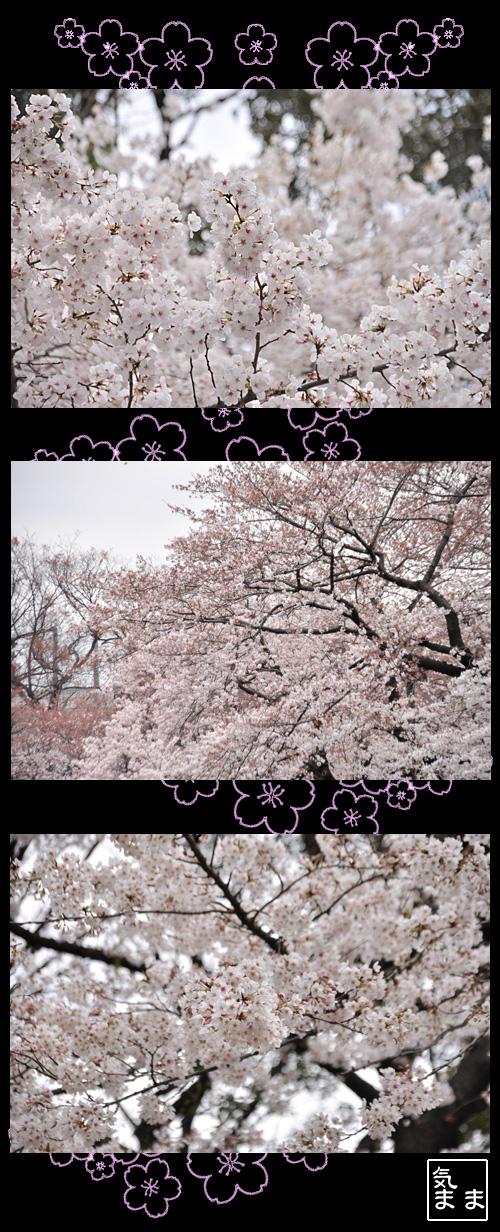 3月31日上野公園のさくら2