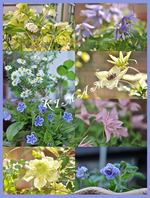 4月5日庭の花