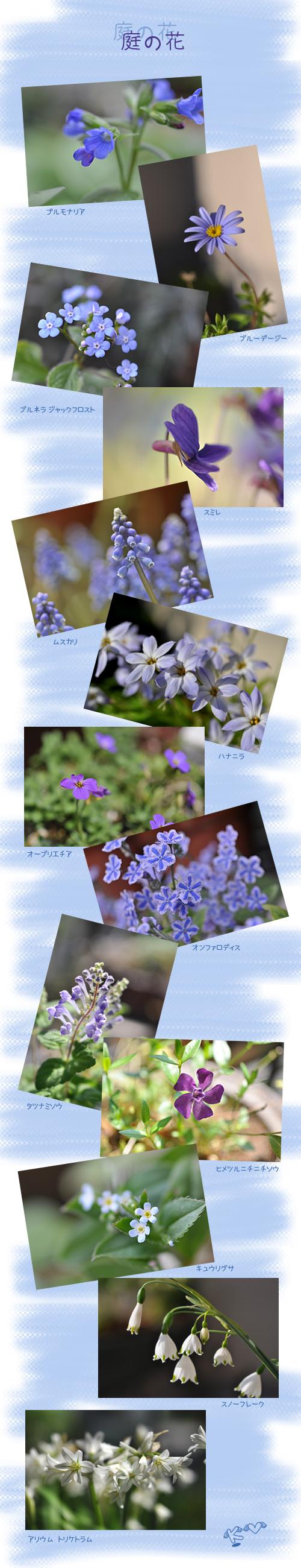 4月13日庭の花