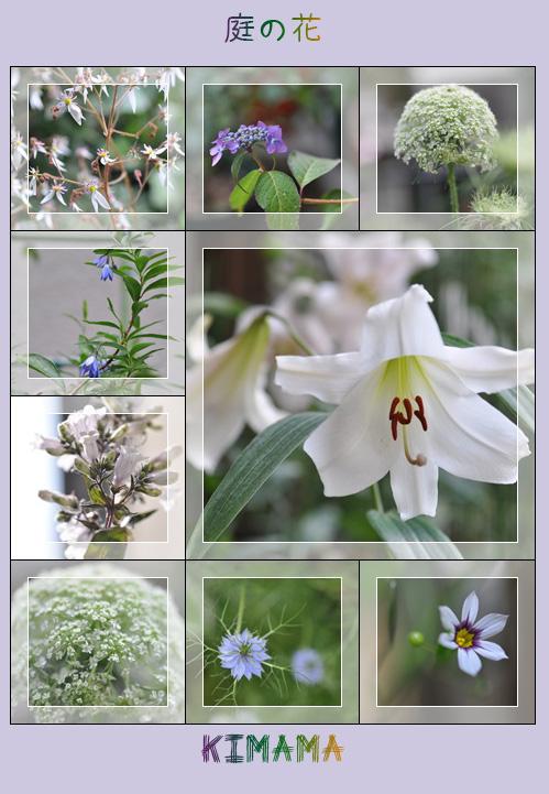 5月22日庭の花
