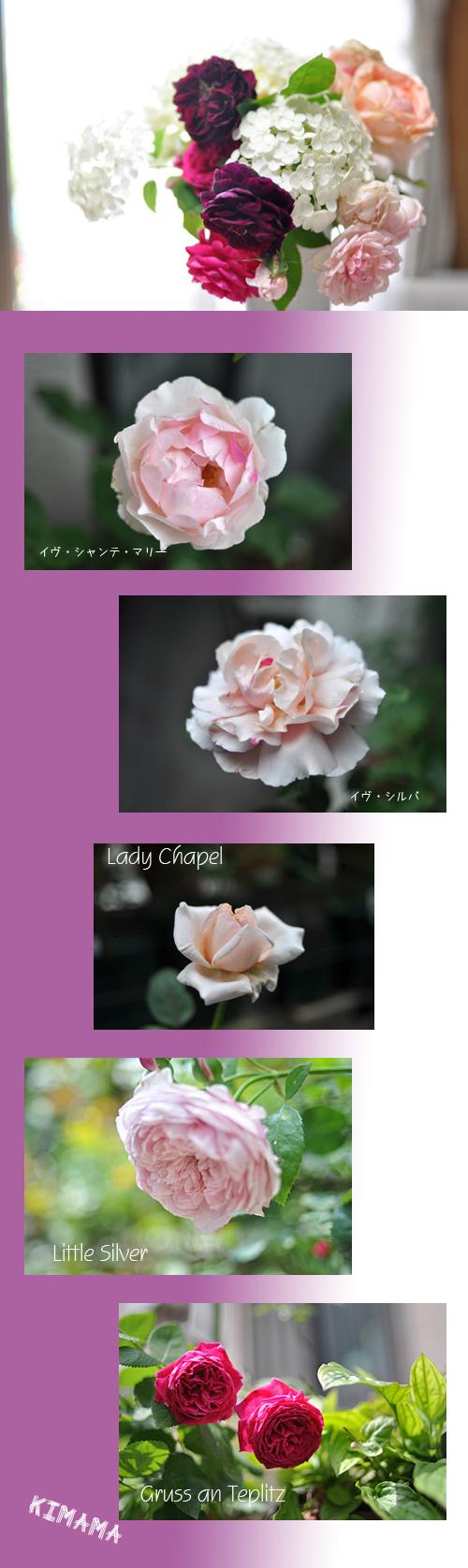 6月22日薔薇6