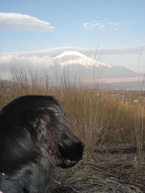 朝のカーロききと富士