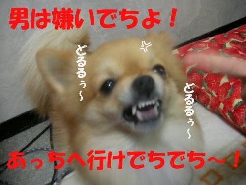 SA080219a_convert_20080221153329.jpg