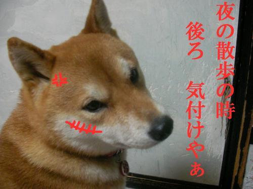 SK080219e_convert_20080220183904.jpg