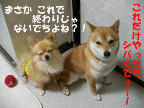 SW080205a_convert_20080218230217.jpg