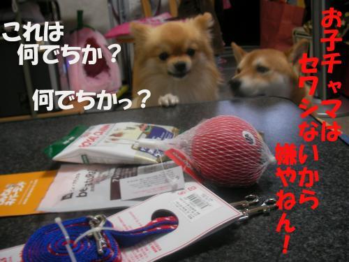SW080218d_convert_20080218234420.jpg