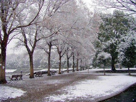 雪の北浦和公園