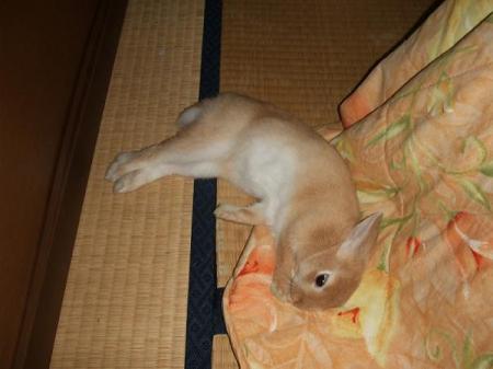 いきなり寝る-w600