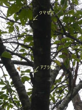 680_20090819231511.jpg