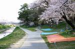 家康行列の日のあおい桜_岡崎公園02