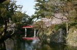家康行列の日のあおい桜_岡崎公園03