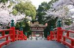 家康行列の日のあおい桜_伊賀八幡宮01