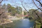 桜前線神橋