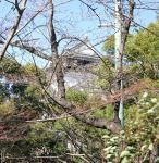 桜前線岡崎城