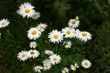 大正池までの花6