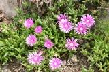 大正池までの花7