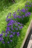 大正池までの花8