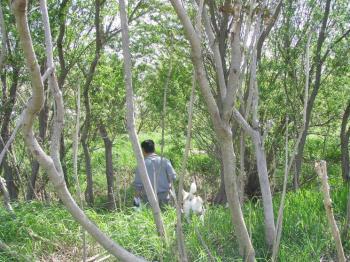 20090519d.jpg