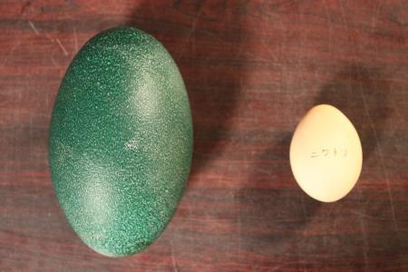 エミュー卵