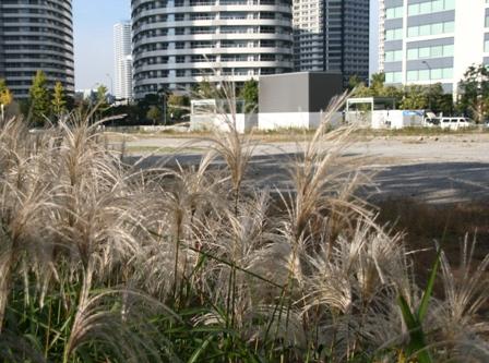 大都会の中の自然の生命力