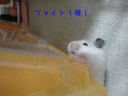 ファイト1発♪