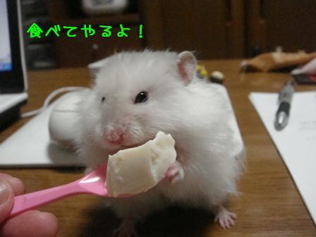 食べてやるよ!
