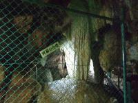 2008_0916葡萄狩り0063
