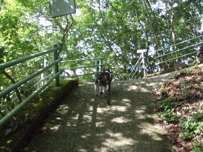 2008_0916葡萄狩り0067