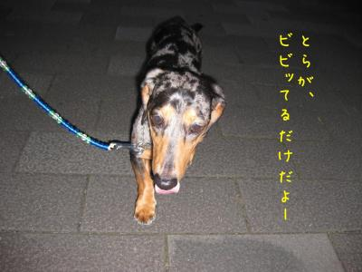 IMG_4737-20090710散歩