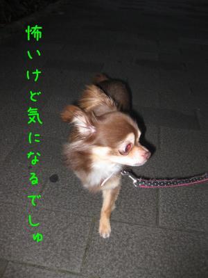 IMG_4738-20090710散歩