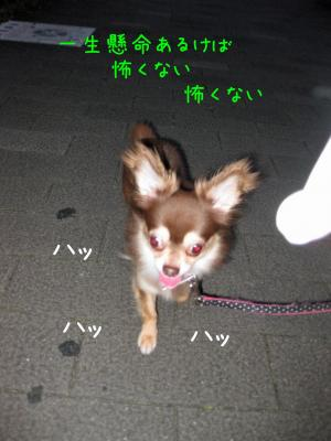 IMG_4739-20090710散歩