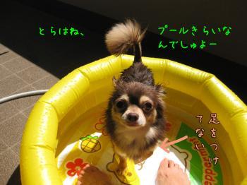 IMG_5096-20090815ぷーる