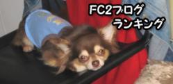 IMG_3681-1.jpg