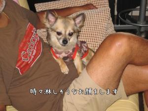 IMG_4599kurumi.jpg